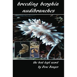 Breeding Berghia Nudibranches The Best Kept Secret